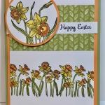 Daffodil Spring