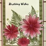 Birthday Daisy